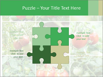 Vegetables Cultivation PowerPoint Template - Slide 43