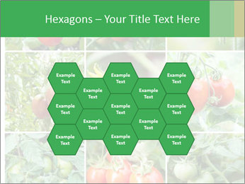 Vegetables Cultivation PowerPoint Template - Slide 44