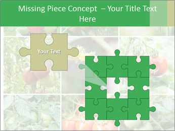 Vegetables Cultivation PowerPoint Template - Slide 45