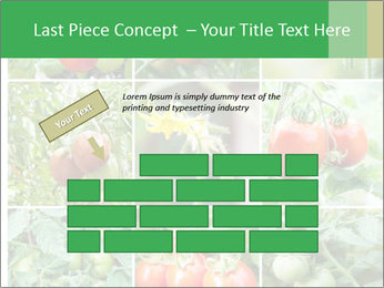 Vegetables Cultivation PowerPoint Template - Slide 46