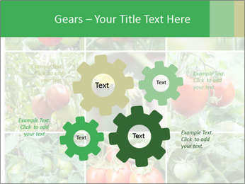 Vegetables Cultivation PowerPoint Template - Slide 47