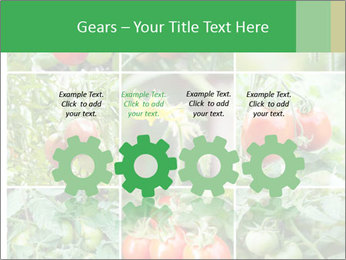 Vegetables Cultivation PowerPoint Template - Slide 48