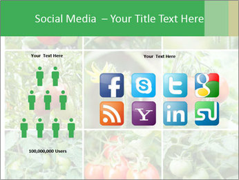 Vegetables Cultivation PowerPoint Template - Slide 5