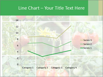 Vegetables Cultivation PowerPoint Template - Slide 54