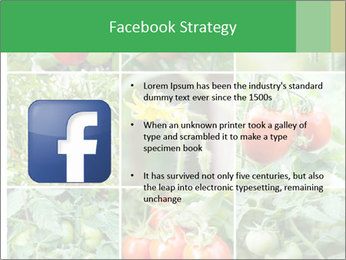 Vegetables Cultivation PowerPoint Template - Slide 6