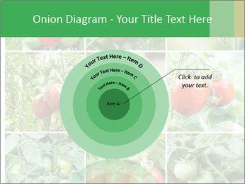 Vegetables Cultivation PowerPoint Template - Slide 61