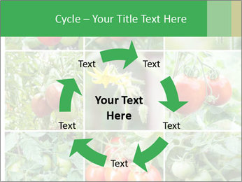 Vegetables Cultivation PowerPoint Template - Slide 62