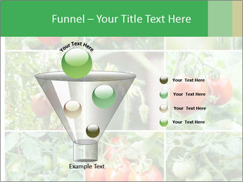 Vegetables Cultivation PowerPoint Template - Slide 63