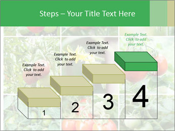 Vegetables Cultivation PowerPoint Template - Slide 64