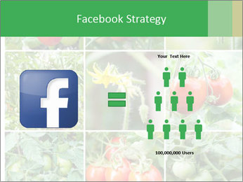 Vegetables Cultivation PowerPoint Template - Slide 7
