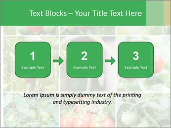 Vegetables Cultivation PowerPoint Template - Slide 71