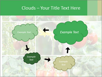 Vegetables Cultivation PowerPoint Template - Slide 72