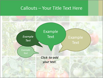 Vegetables Cultivation PowerPoint Template - Slide 73