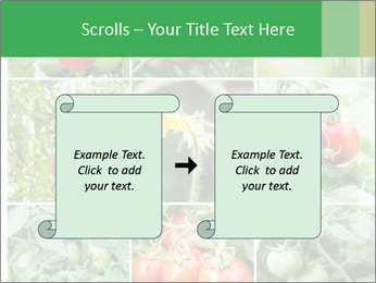 Vegetables Cultivation PowerPoint Template - Slide 74