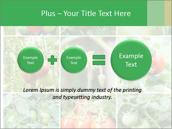 Vegetables Cultivation PowerPoint Template - Slide 75
