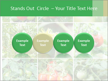 Vegetables Cultivation PowerPoint Template - Slide 76