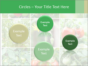 Vegetables Cultivation PowerPoint Template - Slide 77