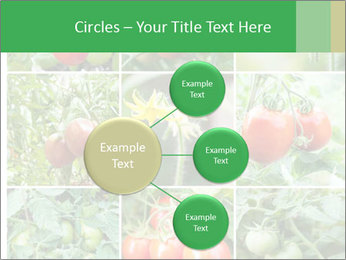 Vegetables Cultivation PowerPoint Template - Slide 79