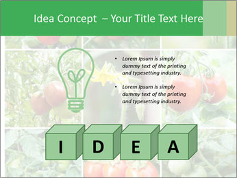 Vegetables Cultivation PowerPoint Template - Slide 80