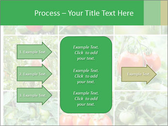 Vegetables Cultivation PowerPoint Template - Slide 85