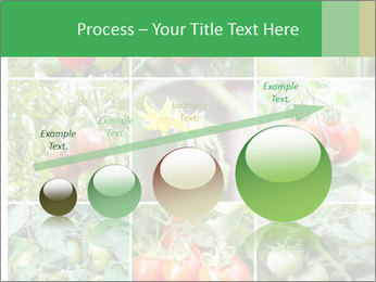 Vegetables Cultivation PowerPoint Template - Slide 87