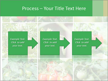 Vegetables Cultivation PowerPoint Template - Slide 88