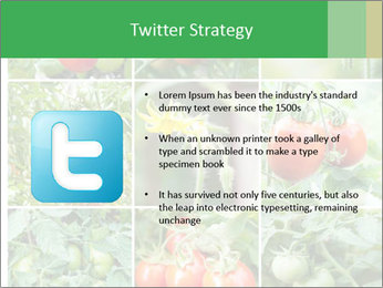 Vegetables Cultivation PowerPoint Template - Slide 9