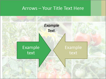Vegetables Cultivation PowerPoint Template - Slide 90