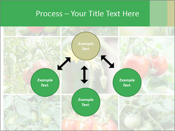 Vegetables Cultivation PowerPoint Template - Slide 91