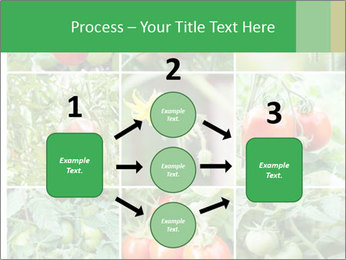Vegetables Cultivation PowerPoint Template - Slide 92