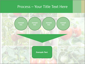 Vegetables Cultivation PowerPoint Template - Slide 93