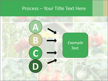Vegetables Cultivation PowerPoint Template - Slide 94