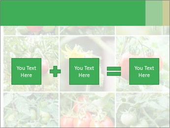 Vegetables Cultivation PowerPoint Template - Slide 95