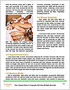 0000089446 Word Template - Page 4