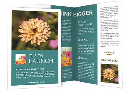 0000089447 Brochure Template