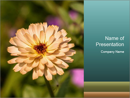 Yellow Flower In Blossom PowerPoint Templates