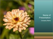 Yellow Flower In Blossom PowerPoint Template