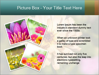 Yellow Flower In Blossom PowerPoint Templates - Slide 23