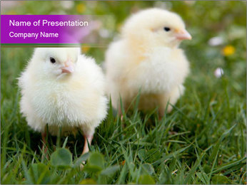 Two Cute Chickens PowerPoint Template - Slide 1