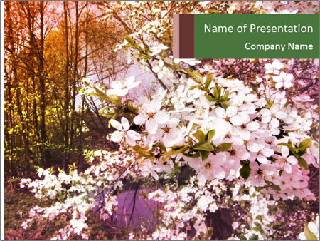 Pink Tree Blossoming PowerPoint Template