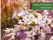 Pink Tree Blossoming PowerPoint Templates
