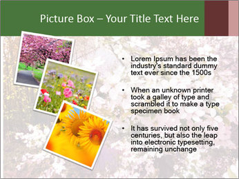 Pink Tree Blossoming PowerPoint Template - Slide 17