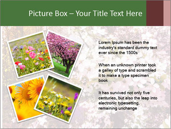 Pink Tree Blossoming PowerPoint Template - Slide 23