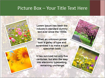 Pink Tree Blossoming PowerPoint Template - Slide 24