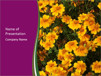 Marigold Flowers PowerPoint Templates - Slide 1