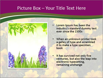Marigold Flowers PowerPoint Templates - Slide 13