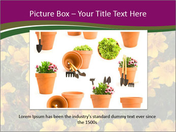 Marigold Flowers PowerPoint Templates - Slide 15