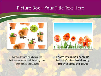 Marigold Flowers PowerPoint Templates - Slide 18