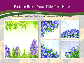 Marigold Flowers PowerPoint Templates - Slide 19