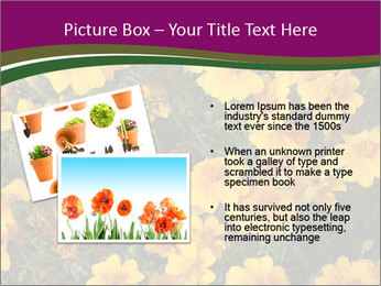 Marigold Flowers PowerPoint Templates - Slide 20
